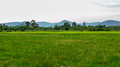 Green Rice Field And Mountain ...