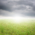 Green rice field and  rainclouds Royalty Free Stock Photo