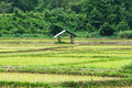 Green rice field view of cottage in thailand Stock Photography