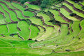 Green rice terraces Royalty Free Stock Photo