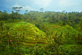 Green rice terraces on bali island indonesia Royalty Free Stock Image