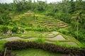 Green rice terraces on Bali island Royalty Free Stock Photo