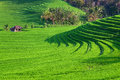Green rice terraces landscape on Bali island Royalty Free Stock Photo