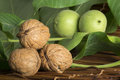 Green and ripe walnuts studio shot walnut leaves Royalty Free Stock Images