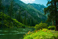 Green river running though mountains covered lush evergreen forest wildflowers copy space Royalty Free Stock Photos