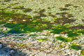 Green river seagrass in in bindal in nordland norway on a sunny summer day Stock Image