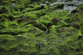 Green rock on coastline seaweed bali indonesia asia Royalty Free Stock Image