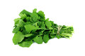 Green rocket roquette leaves white background Royalty Free Stock Photo