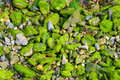 Green rocks moss covered Stock Photo
