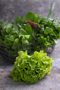 Green romaine lettuce Royalty Free Stock Photo
