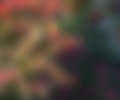Green and rose blurred image background Royalty Free Stock Images