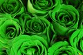 Green Roses Bouquet As Backgro...