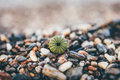 Green Round Plant Near Pebbles Single Focus Photography during Daytime