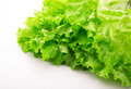 Green salad leaf lettuce isolated over white fresh vegetables Stock Photo
