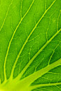 Green salad leaf texture Stock Photos