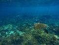 Green sea turtle closeup underwater photo Royalty Free Stock Photo