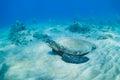 Green sea turtle underwater Royalty Free Stock Photo