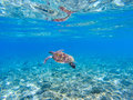 Green sea turtle underwater photo. Sunny tropical lagoon and marine animal. Royalty Free Stock Photo