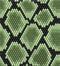 Green seamless snake skin pattern for background design Royalty Free Stock Images