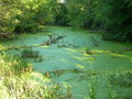 Green Secluded Pond Royalty Free Stock Photography