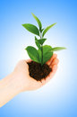 Green seedling in hand isolated Royalty Free Stock Photo