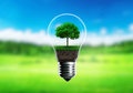 Green seedlings in a light bulb alternative energy concept, gree Royalty Free Stock Photo
