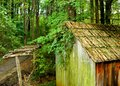 Green shed the moss and vines have taken over Stock Images