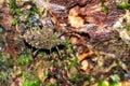 Green shield bug Masoala Royalty Free Stock Photo