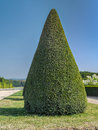 Green shrub conical evergreen trimmed in versailles garden france Stock Images