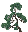 Green single pine on white illustration Royalty Free Stock Photography