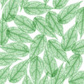 Green Skeleton Leaf for background. X-ray Royalty Free Stock Photo