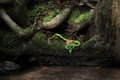 Green snake in the forests of thailand Stock Photography