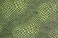 Green snake skin Stock Images