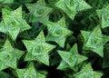 Green Spiky Cactus Royalty Free Stock Photo