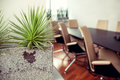 Green spiky plant in an empty office, conference room Royalty Free Stock Photo