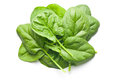 Green spinach leaves Royalty Free Stock Photo