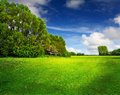 Green spring field and blue sky Royalty Free Stock Image