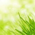 Green spring grass on bokeh  background Royalty Free Stock Image