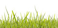 Green spring grass isolated white background Stock Photo
