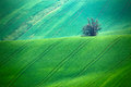 Green spring hills arable lands in czech moravia Stock Images