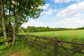 Green spring landscape Royalty Free Stock Images