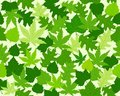 Green spring leaves texture seamless pattern Royalty Free Stock Photos