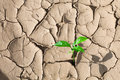 Green sprout on barren soil concept Royalty Free Stock Images