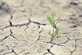 Green sprout with dry cracked earth Royalty Free Stock Photo