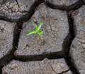 A green sprout is in dry earth Royalty Free Stock Photo
