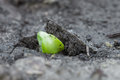 Green sprout in the ground Royalty Free Stock Photo