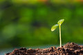 Green sprout growing ground new start beginning concept Royalty Free Stock Image