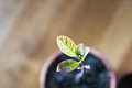 A green sprout growing out from soil Royalty Free Stock Photo