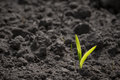 Green sprout growing in the soil Royalty Free Stock Photo