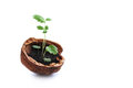 Green sprout leaves growing walnut shell. Eco design new life concept. white background. Soft focus, copy space